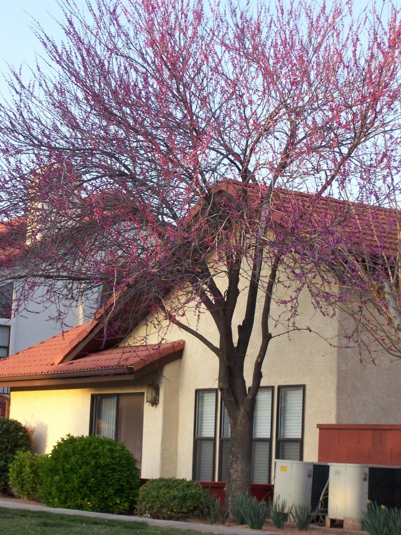 Springtime_014